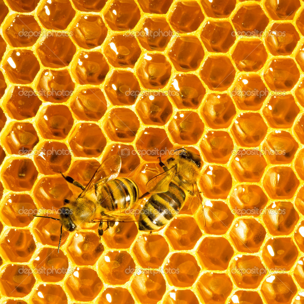 Bees work on honeycomb  Stock Photo #11375625