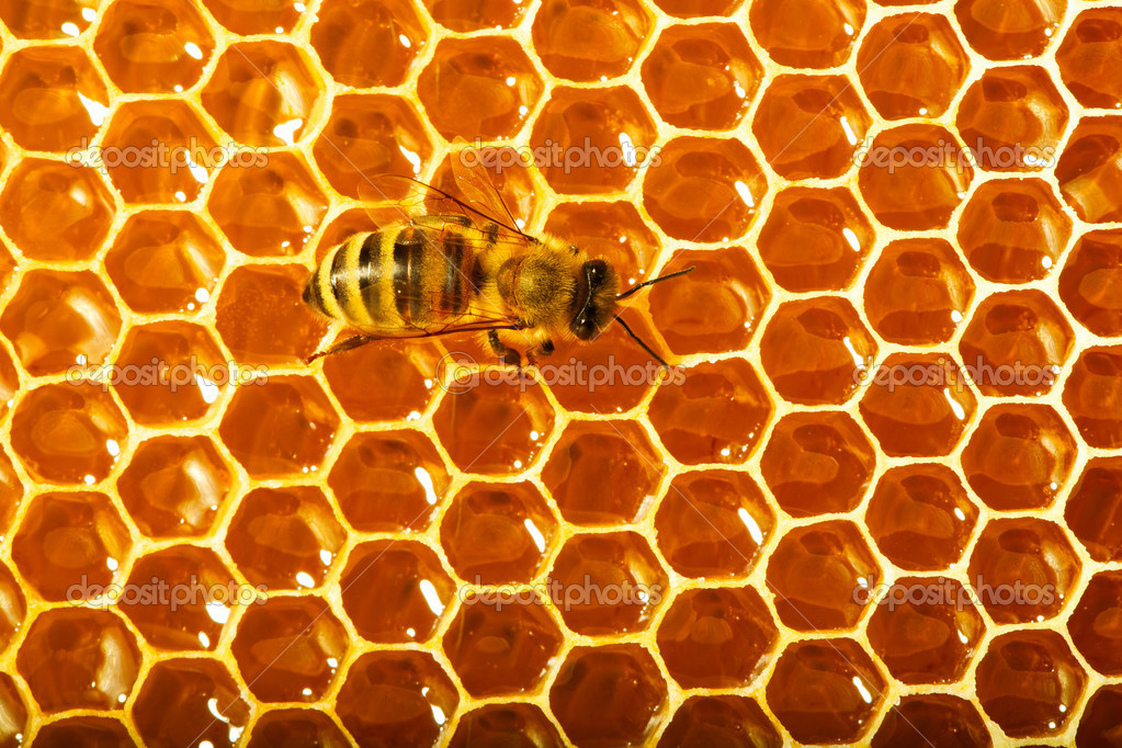 One bee works on honeycomb — Stock Photo #11375627