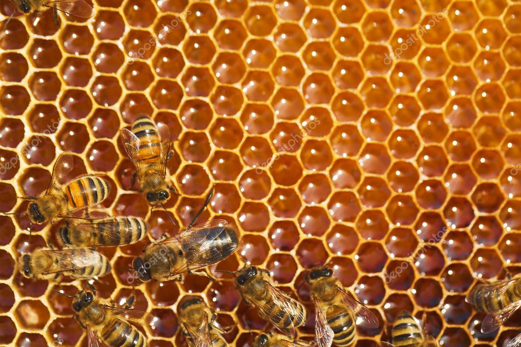 Bees works on honeycombs  Stock Photo #11375840