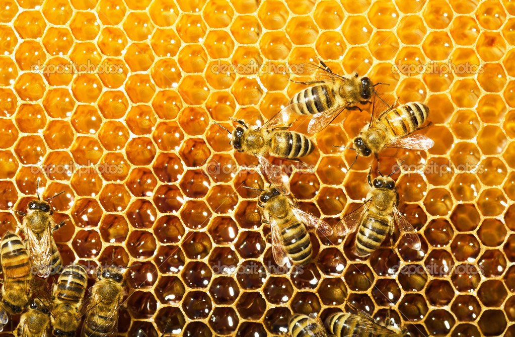 bees work on honeycomb � stock photo 169 smaglov 11375845
