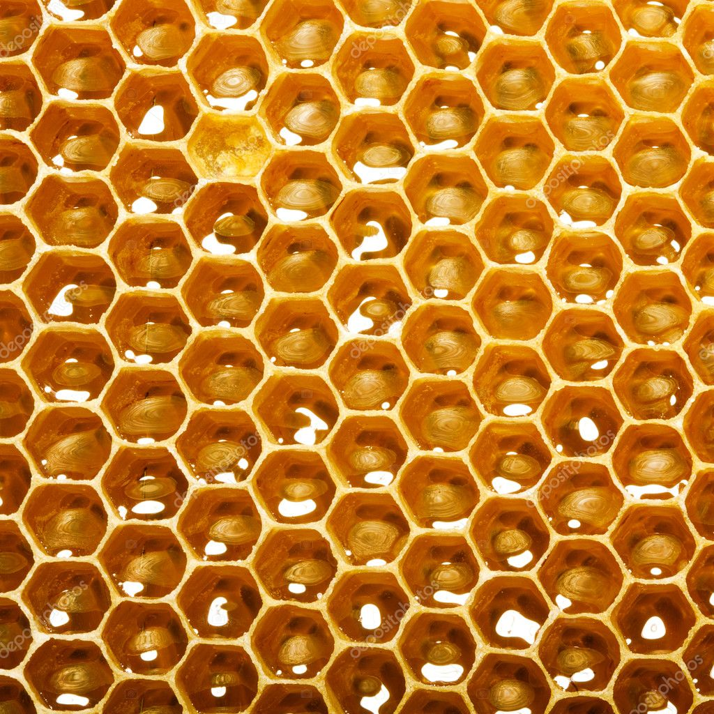 Fresh honey in comb — Stock Photo #11375889