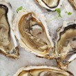 Fresh oysters platter served in ice — Stock Photo