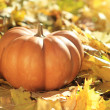 Halloween pumpkin on leaves in woods — Stock Photo #11584202