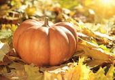 Citrouille d'halloween sur les feuilles en bois — Photo