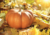 Halloween pumpkin on leaves in woods — Stok fotoğraf