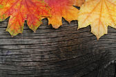 Autumn wooden background — Stock Photo