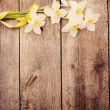 Royalty-Free Stock Photo: Flowers on wooden background
