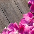 Pink petals on wooden background — Stock Photo