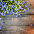 Flowers on wooden background — Stock Photo #11164725