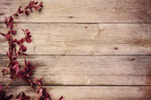 Barberry branch on a wooden background — Stock Photo