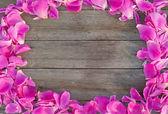 Ahşap zemin üzerinde pembe taç yaprakları — Stok fotoğraf