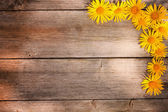 Spring flowers on wooden background — Stock Photo