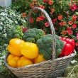 Basket of fresh vegetables — Stock Photo #11669443