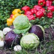 Cabbage and other vegetables — Stock Photo