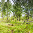 Постер, плакат: Meadow with lilies of the valley in the forest