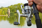 Fish caught on a hook — Stock Photo