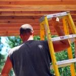 Carpenter. — Stock Photo
