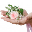 Pink rose in female hands — Stock Photo #11357782
