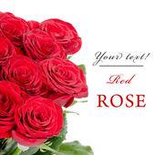 Ramo de rosas rojas sobre fondo blanco aislado — Foto de Stock