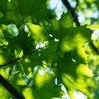 Leaves — Stock Photo #10981388