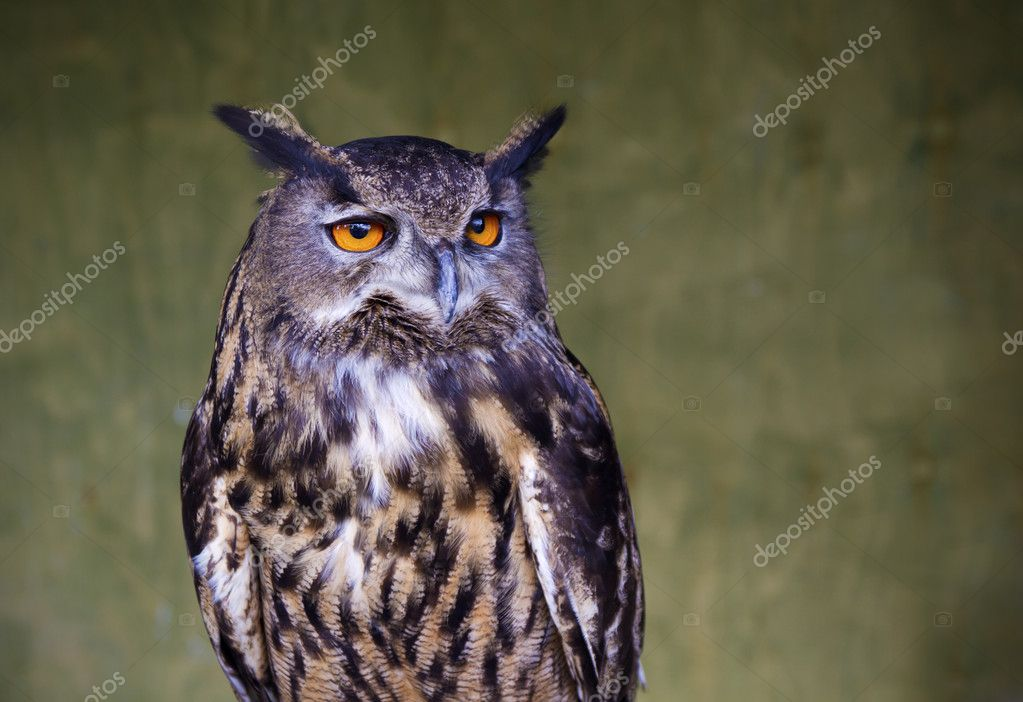 Portrait of an Owl with slight vingette added — Stock Photo #10783408