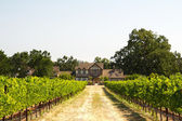 Beautiful house in a vineyard — Stock Photo