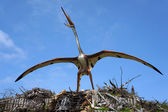 Quetzalcoatlus, pterosaur. Model of dinosaur. — Stock Photo