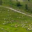 Sheep grazing — Stock Photo #10948887