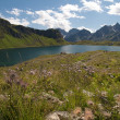 Alpine meadow - Stock Photo