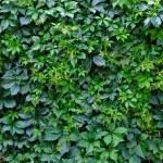 Green vegetative background — Stock Photo