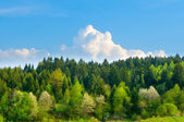 Spring forest landscape. Carpatian beskids — Stock Photo
