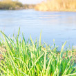 Green grass on bank of river on sunny day — Stock Photo #11362623