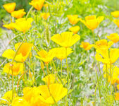 Yellow flowers on green field — Stock Photo