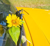 Ecological yellow sunflower and not ecological yellow car — Stock Photo