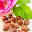 Rose hips berry and rose-hip flower — Stock Photo #11094400