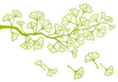 Ginkgo branch with leaves, vector — Stock Vector