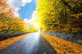 Autumn forest road — Stockfoto