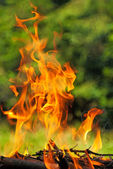 Fire from burning wood — Stockfoto