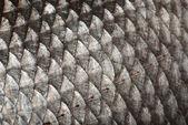Escalas de peixes de fundo — Foto Stock