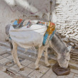 Donkey eating at Fez, Morocco — Stock Photo
