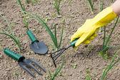 Garden work - weeding — Stock Photo