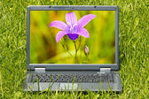Computer with beautiful flower on screen — Stock Photo