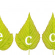 "Spelling ""eco"" on green leaves — Stock Photo"