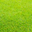 Mown green grass — Stock Photo