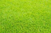 Mown green grass — Stock Photo