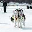 Stock Photo: Mushing at Baikal Fishing 2012