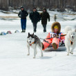 Mushing at Baikal Fishing 2012 - Stock Photo