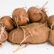 Germinating potatoes - Stock Photo