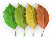 Four season. Green, red and yeloow leaf — Stock Photo