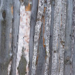 Stock Photo: Unpainted rough wooden wall